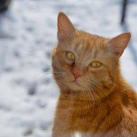 Рыженький сосед заглянул в окошко утром :: Таня Харитонова