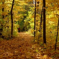 лес в октябре. :: Alexander Hersonski