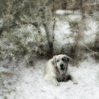 С первым снегом! :: Людмила Фил