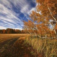 Обуяла осень золотая 3 :: Сергей Жуков