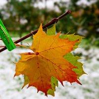 Осень,  задержись))) :: Ilya Goidin