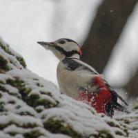 Первый снег :: Елена Шел