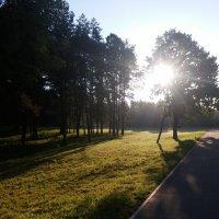 Утреннее солнышко :: Юлия