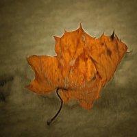 Приснись, приснись, рыжий лист кленовый.... :: Tatiana Markova