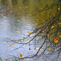 Осень дождями ляжет.. :: Валентина Дмитровская