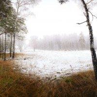 И слышатся песни, осени снежной 16 :: Сергей Жуков