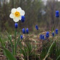 Весна :: Валентина