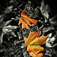 Осень :: Alexander Dementev