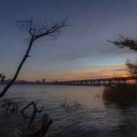 Даже мертвые деревья тянуться к небу :: Artem Zelenyuk