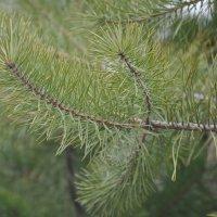 #needles :: foto ZOOM
