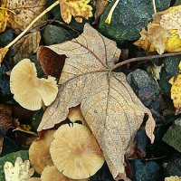 Осенние зарисовки :: Надежда