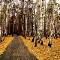 На жёлтом покрывале октября :: Елена Строганова