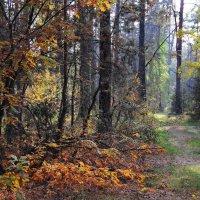 Солнечной грустинкой лес встречал... :: Лесо-Вед (Баранов)