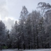 На берегу пруда :: Liubov Garkusha