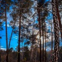 Осень в лесу :: Евгений Небензя