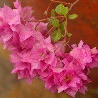 Природа Лимы :: Svetlana Plasentsiia