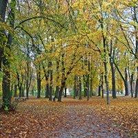 """""""Ах, какая осень в старом парке, Золота не жалко, посмотри...."""" :: Galina Dzubina"""
