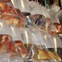 Рыбки продаются... :: Елена