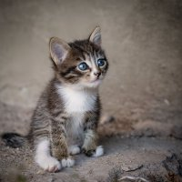 Уличный котенок :: AnnetSV