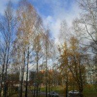 Как весной! Только деревья жёлтые... :: BoxerMak Mak