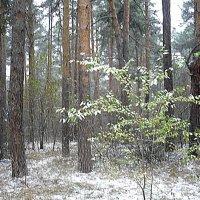 первый снег :: натальябонд бондаренко