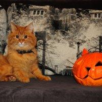 два кота :: Краснов  Ю Ф