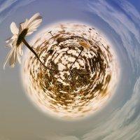 Ромашки  с моей планеты.. :: Лилия .