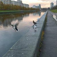 Птички :: Митя Дмитрий Митя