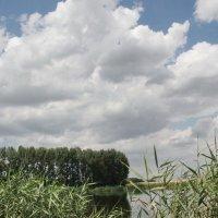 Небо и камыш :: Олег Афанасьевич Сергеев