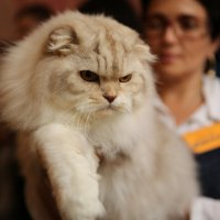На выставке кошек :: Игорь Смолин