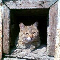 Пушок - мечтатель, а можит просто мудрый кот :: Владимир Ростовский