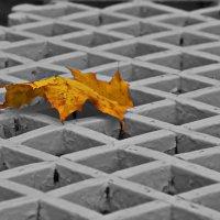 Рыжий лист кленовый. :: Марина Волкова