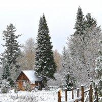 Выпал снег... :: Вера Андреева
