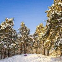 Зима пришла!!!! :: Елена Баландина