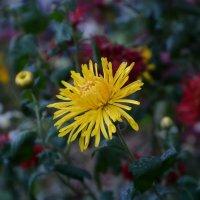 Первые заморозки на последние цветы... :: *MIRA* **