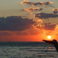 Солнце садится... :: nika555nika Ирина