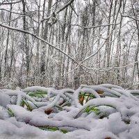 Зима наступает ... :: Va-Dim ...