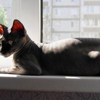 Солнечные ванны :: nika555nika Ирина