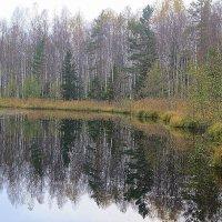 Осеннее отражение. :: Валентина Жукова