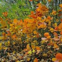 Осенняя акварель.... :: владимир
