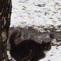 Всем ли первый снег в радость? :: Андрей Лукьянов