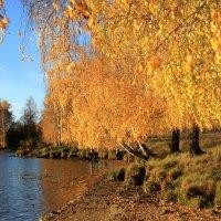 Золотая осень :: Нэля Лысенко