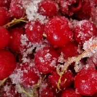 Замороженная красная смородина в сахаре :: Нина Корешкова