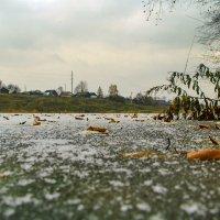 Рыбки золотые бегают по льду...)) :: Владимир Хиль