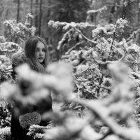 в лесу :: Сергей Калистратов