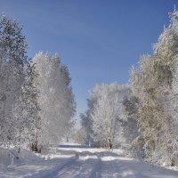 Лес в октябре :: Наталья Сорокина