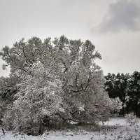 Зима :: Ард Прохоров
