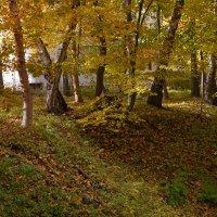 Золотая осень :: Dmitry Swanson