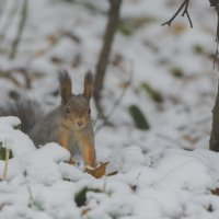 Первый снег :: Александр Колесников