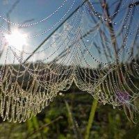 Росяные сети лета :: Ольга Саранцева